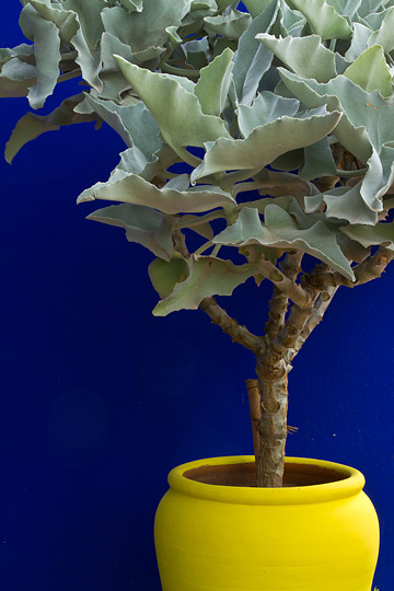 Potted Plant, Marjorelle Gardens, Morocco