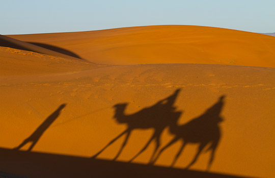 Shadows of Camels and riders, Morocco