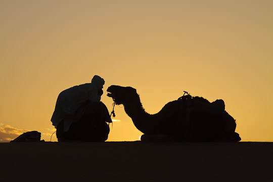 Camel and Shepherd, Morocco