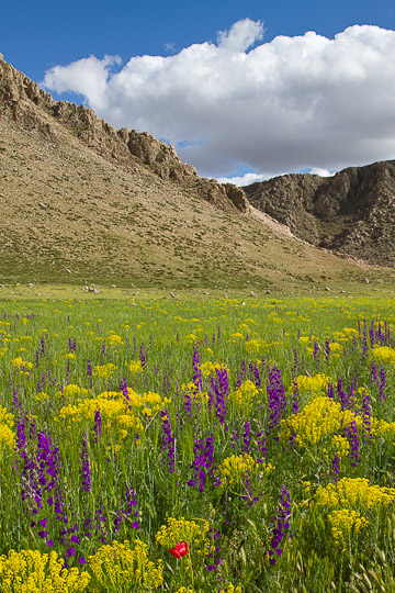 Spring Flowers in Atlas Mountains, Morocco