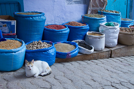 Cat and Spice Bags, Chefchaouen, Morocco