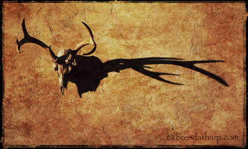 Animal Skull and shadow photograph