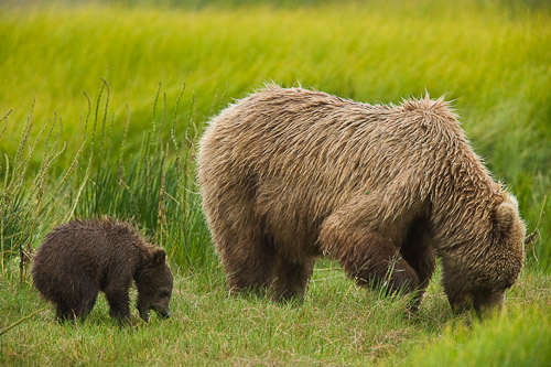 Mom and Cub eating