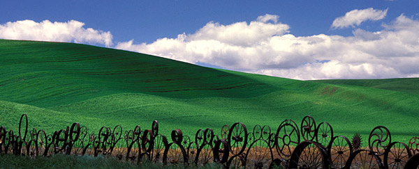 Green fields of Spring in the Palouse, WA