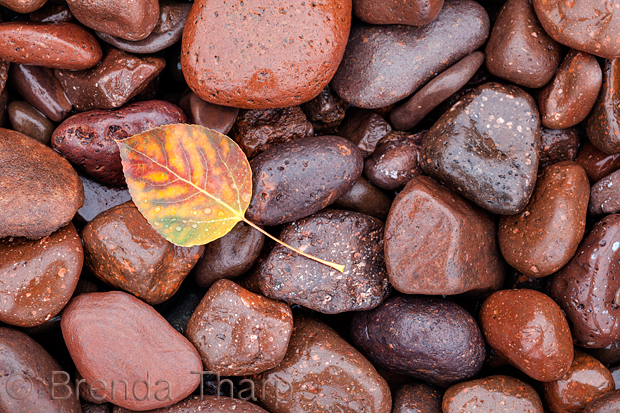 Leaf and beach pebbles, Keewenaw Peninsula, Michigan