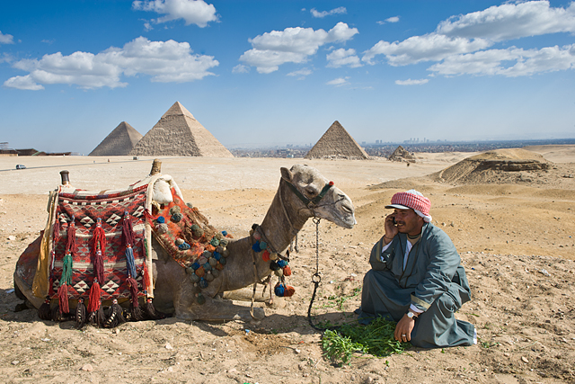 man using cell phone with camel, Egypt